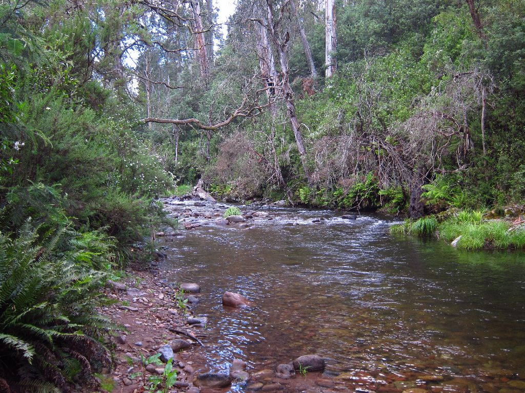 Photos From Jamieson River And Mitchells Flat Trip